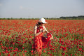 Harvesting poppy young woman in a field Royalty Free Stock Image