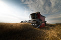 Harvesting of soy bean field in the summer Royalty Free Stock Photos