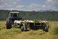 Harvesting triticale for silage farmers harvest a crop of on a dairy farm Stock Images
