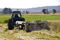 Harvesting triticale for silage farmers harvest a crop of on a dairy farm Stock Photos