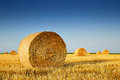 After harvesting of weat grain Royalty Free Stock Photo
