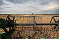 Harvesting Wheat For Profit Stock Images