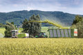 Harvesting of whole crop silage forage harvester with chopped material transporter during grain as for biogas production Stock Image