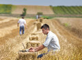 Harvesting young landowner with laptop supervising work Stock Image