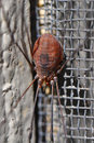 Harvestman arachnid Stock Images