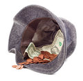 Hat with donated money Royalty Free Stock Photo
