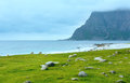 Haukland beach summer view norway lofoten flock of sheep near cloudy Stock Photos