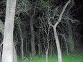 Haunted trees Royalty Free Stock Photo
