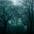 Haunted Woods Royalty Free Stock Image