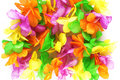 Hawaiian colorful flowers Royalty Free Stock Photo