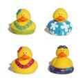 Hawaiian Ducks Royalty Free Stock Images