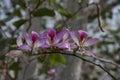 Hawaiian flowers growing on tree limb, Hawaii, USA