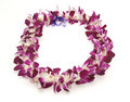 Hawaiian Lei Stock Photos