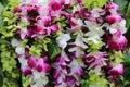 Hawaiian Orchid lei Royalty Free Stock Photo