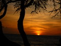 Hawaiian sunset beautiful with tree silhouettes Royalty Free Stock Photos