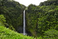Hawaiian waterfall akaka falls state park hawaii Stock Photography