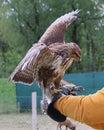 The Hawk Landed