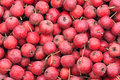 Haws Royalty Free Stock Photo