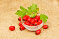 Hawthorn berries on a burlap background Stock Photography