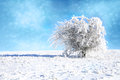 Hawthorn in snow. Royalty Free Stock Photos