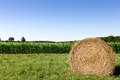 Hay Bale in Corn Field Royalty Free Stock Photo