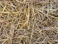 Royalty Free Stock Photography Hay bale