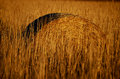Hay bale on field end of summer Royalty Free Stock Photo