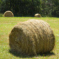 Hay bale on grass Stock Images