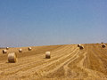Hay bale rolls Stock Photography