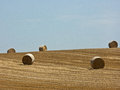Hay bale rolls Royalty Free Stock Images