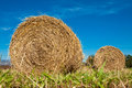 Hay bale rolls in a green field paddock queensland australia Royalty Free Stock Image