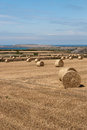 Hay bales in cornwall of on the coast at newquay Stock Image