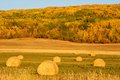 Hay bales in fall round of with a hillside colour the background Stock Image