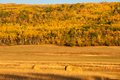 Hay bales in fall round of with a hillside colour the background Stock Photo