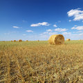 Hay bales in field. Royalty Free Stock Photo