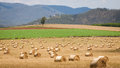 Hay bales in a field rolls drying queensland australia Royalty Free Stock Photography