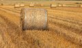 Hay bales on filed after harvest first in focus Royalty Free Stock Photography