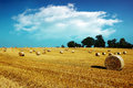 Hay bales in golden field Royalty Free Stock Photo