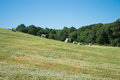 Hay bales in a green hill Royalty Free Stock Photo