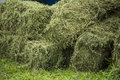 Hay bales of on the ground Stock Image