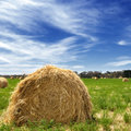 Hay bales in a lush field with bright blue sky Royalty Free Stock Photography