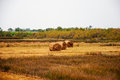 Hay bales on the meadow in autumn Stock Image