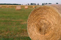 Hay bales in paddock for livestock feed Royalty Free Stock Photos