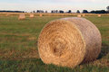 Hay bales in paddock for livestock feed Stock Photography