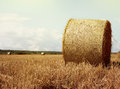 Hay bales rolls on the field after harvest. Light Royalty Free Stock Photo