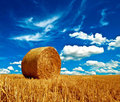 Hay ball harvest Royalty Free Stock Photo