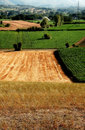 Hay and corn fields Stock Image