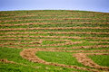 Hay crop swath in saskatchewan canada blue sky Royalty Free Stock Images