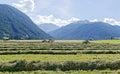Hay harvest Royalty Free Stock Photo
