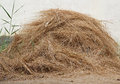 Hay pile big of in country yard Stock Photography